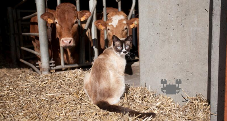 from-cats-to-cattle.jpg